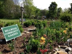 Millwood Garden