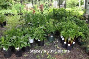 garden fest plants