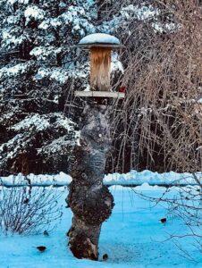 Bird house in snow