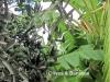 olivesbananas