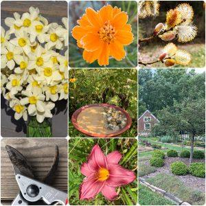 seasonal-gardening-tasks